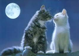 Cat inlove