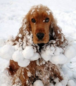 dog in snow